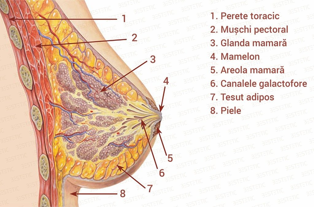 Mamelon ombilicat sau infundat Schema 1